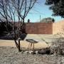 orania-afrikaner-boer-private-town-05